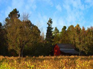 Barn near of the trees