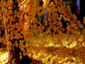 Tree with yellow leaves under the light
