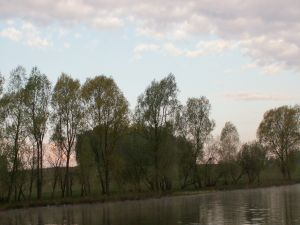Trees near the water