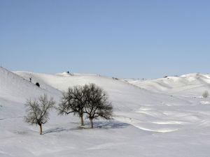 Trees in a snowy landscape