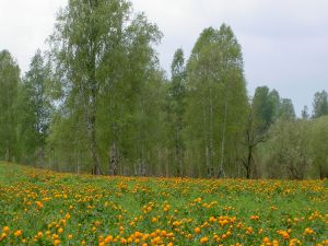 Trees and yellow flowers