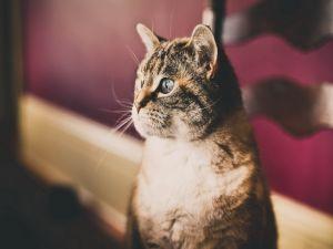 A nice quiet cat
