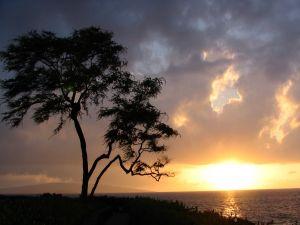 A tree watching a magic sunrise