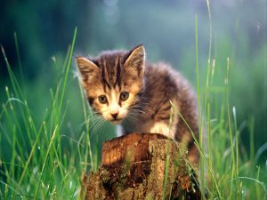Kitten with sad face in the grass
