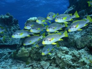Group of fish near marine rocks