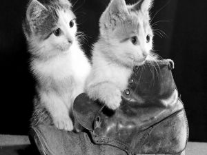 Two kittens playing with a boot