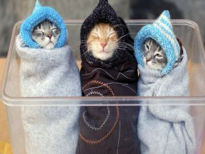 Three very wrapped kittens