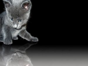 Kitten reflected on the floor