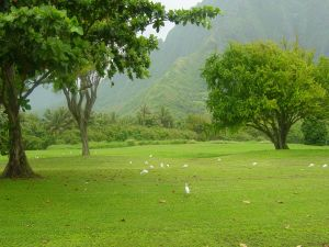 Green meadow with white birds