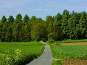 Narrow road towards the grove