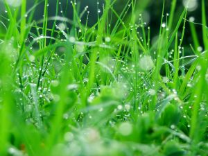 Wet grass by rain