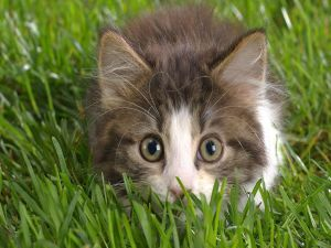 Crouched in the grass