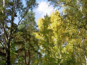 The sun illuminating the treetops