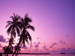 Palms and purple sky on a beach
