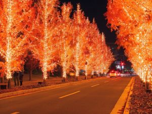 Road with trees lit