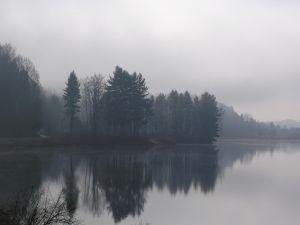 Fog among the trees of the lake