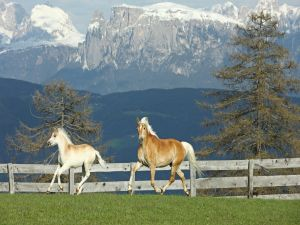 Horses near the mountains