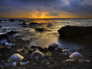 Turtles rising from the sea