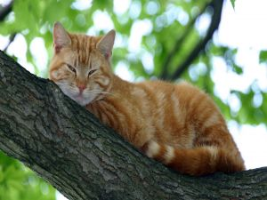 A cat lying on the tree branch