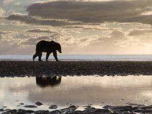 A lone bear near water