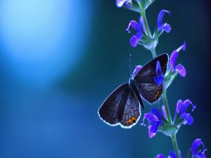 Butterfly and flowers blue colored