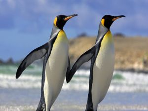 Two slender penguins