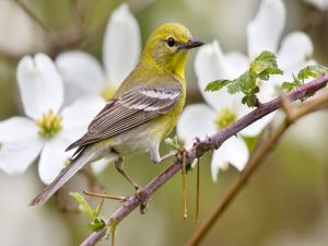 Bird and white flowers