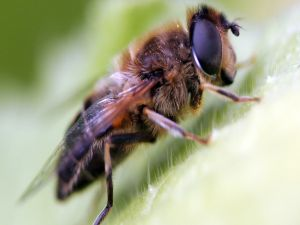 A bee close up view