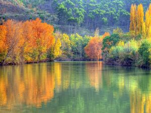 Color trees reflected in water