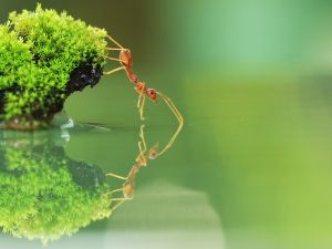 An ant in balance