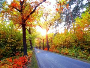 Road between trees and plants in autumn
