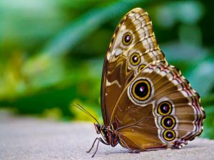 Butterfly perched in the ground