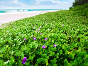 Green plants with flowers near the beach