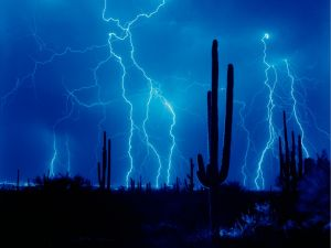 Blue rays near the cactus