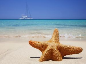 Starfish on the sand of a beach
