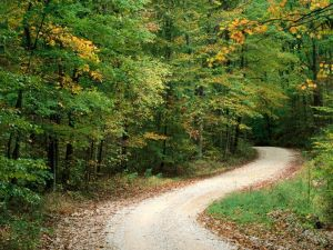 Dirt road among trees