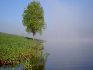 Tree at waterside