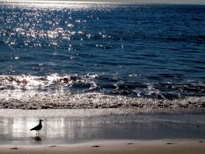 Bird walking on the beach at sunrise
