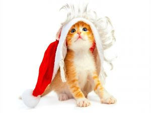 Kitten with wig and hat of Santa Claus