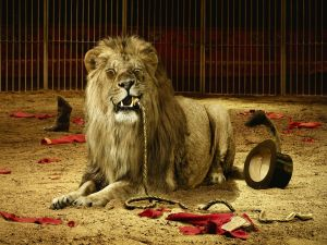 The lion ate the tamer