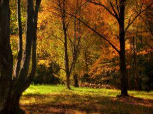Green grass between autumnal trees