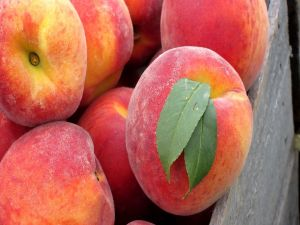 Exquisite and ripe peaches