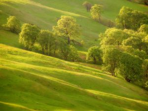 Trees over green grass