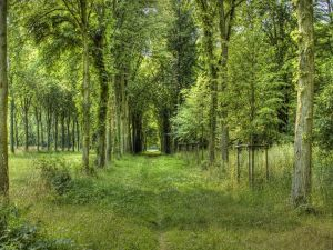 Trees and green road