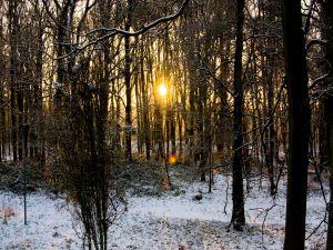 Snow under the trees