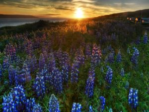 Flowers in the field at sunset
