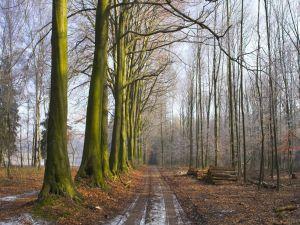 Road between leafless trees