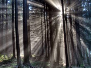 Sunlight enters the forest