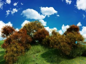 Brown shrubs