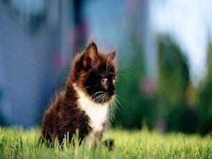 Black kitten with white speck